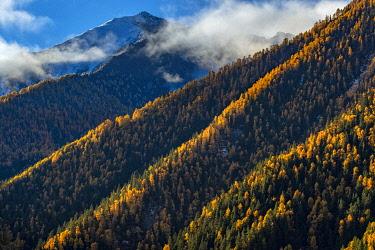 CH11821AW Asia, China, Sichuan Province, Shuangqiao Valley, Xiaojin County, Mountain ridge in autumn