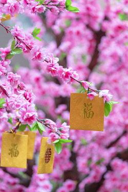 CH11896AWRF Good luck envelopes for Chinese New Year on Lee Tung Avenue, Wan Chai, Hong Kong Island, Hong Kong
