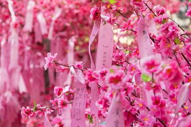 CH11846AW Prayer ribbons and blossom for Chinese New Year at Man Mo Temple, Sheung Wan, Hong Kong Island, Hong Kong