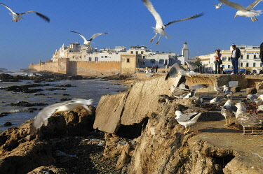 IBLEST01786060 View of Mogador, historic district of Essaouira, Unesco World Heritage Site, Morocco, North Africa, Africa