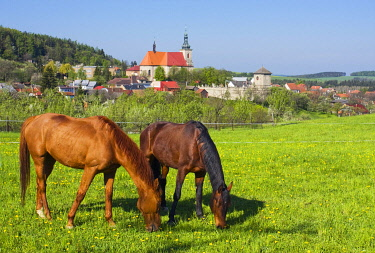 IBXGIG01790450 Horses, Strilky, Kromeriz district, Zlin region, Moravia, Czech Republic, Europe
