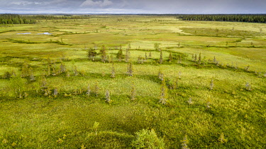 IBXGZS04820337 Drone view, aerial photo, arctic boreal forest with Pines (Pinus) and Birches (Betula) in wetland, moor, Sodankyla, Lapland, Finland, Europe