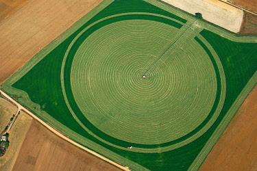 IBXHWE04859733 Almost mown round field, green fodder, aerial view, Segovia, Spain, Europe