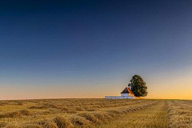 IBXSEI04821706 Sank Walburga Chapel in cornfield at Blue Hour, Kaufering, Bavaria, Germany, Europe