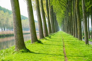 BEL1846AW Rows of trees along a canal in spring, Damme, West Flanders, Belgium