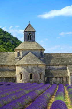 FRA11397AWRF Lavender fields in full bloom in early July in front of Abbaye de Sénanque Abbey, Vaucluse, Provence-Alpes-Côte d'Azur, France