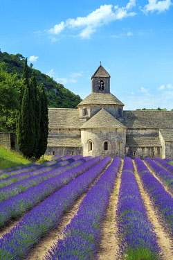 FRA11398AWRF Lavender fields in full bloom in early July in front of Abbaye de Sénanque Abbey, Vaucluse, Provence-Alpes-Côte d'Azur, France