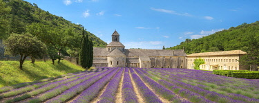 FRA11291AW Lavender fields in full bloom in early July in front of Abbaye de Sénanque Abbey, Vaucluse, Provence-Alpes-Côte d'Azur, France