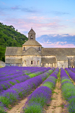 FRA11300AW Lavender fields in full bloom in early July in front of Abbaye de Sénanque Abbey at sunrise, Vaucluse, Provence-Alpes-Côte d'Azur, France