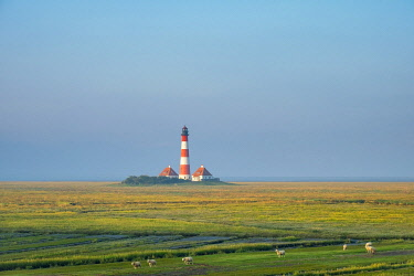 GER11808AW Sheep grazing in front of Westerhever Lighthouse, built in 1906, Westerhever, Nordfriesland, Schleswig-Holstein, Germany
