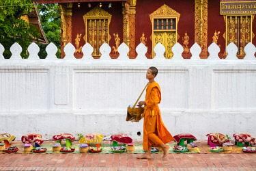 LAO1323AW Buddhist novice monks recieve alms (Tak Bat) in front of Wat Sene Souk Haram temple, Luang Prabang, Louangphabang Province, Laos