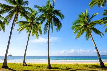 PHI1634AW Palm trees on Nacpan Beach, El Nido, Palawan, Philippines