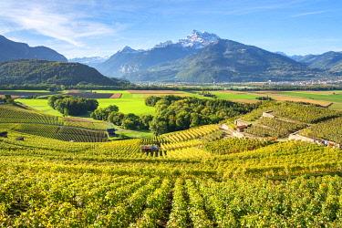 SWI8372AW View vineyards and fertile Rhone near Ollon, Vaud Canton, Switzerland.