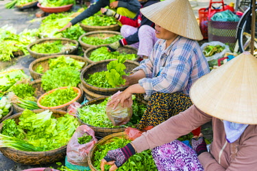 VIT1685AW Women selling lettuce and herbs at the central market in Hoi An, Quang Nam Province, Vietnam