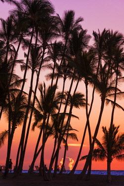 US12RBS0450 Sunset through silhouetted palms at Anaeho'omalu Bay, Kohala Coast, Big Island, Hawaii, USA
