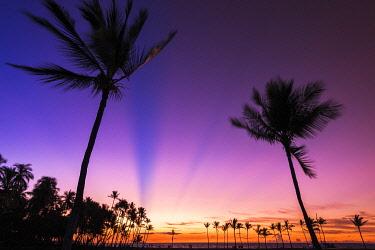 US12RBS0457 Sunset through silhouetted palms at Anaeho'omalu Bay, Kohala Coast, Big Island, Hawaii, USA
