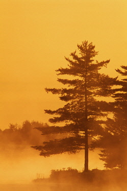 CN08BJY0392 Canada, Ontario, Burwash. Trees and lake in morning fog