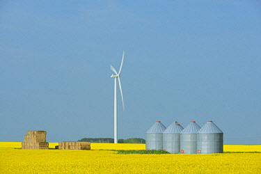 CN03BJY0480 Canada, Manitoba, Saint Leon. Canola crop and wind turbines