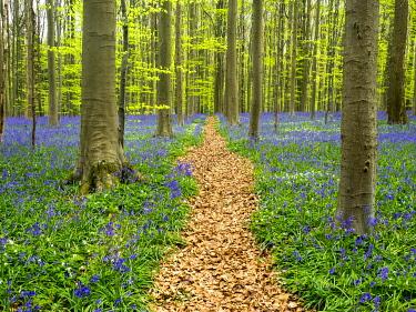 EU04TEG0107 Belgium. Path through the Blue Forest