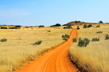 AF42KSU0005 Red sand road in Kgalagadi Transfrontier Park, South Africa