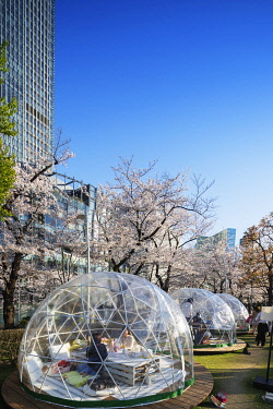 JAP1753 Asia, Japan, Tokyo, Roppongi Mid town, Chandon Blossom Lounge during spring festival