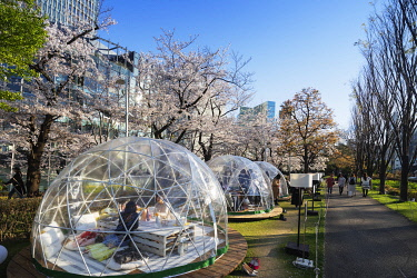 JAP1754 Asia, Japan, Tokyo, Roppongi Mid town, Chandon Blossom Lounge during spring festival