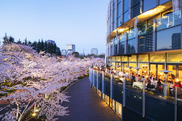 JAP1758 Asia, Japan, Tokyo, Roppongi, Tokyo Mid Town, spring cherry blossoms,