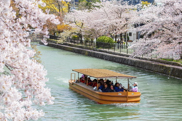 JAP1783 Asia, Japan, Kyoto, tourist boat looking at spring cherry blossom