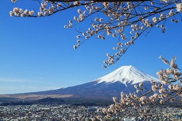 JAP1808 Asia, Japan, Honshu, Yamanashi prefecture, spring cherry blossom and Mt Fuji (3776m) - Unesco site