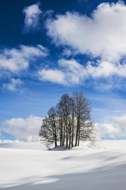 IBXDJS04860700 Group of trees in snowy landscape with cloudy sky, Hinterzarten, Black Forest, Baden-Wurttemberg, Germany, Europe