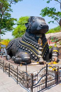 IBXMMW03919081 Statue of a decorated holy cow, Nandi Bull, Chamundi Hill, Mysore, Karnataka, India, Asia