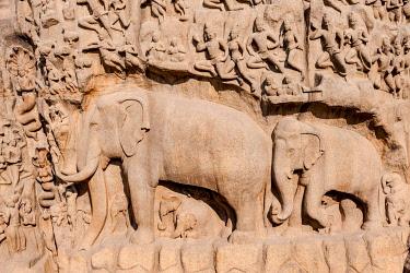 IBXMMW03920253 Bas-relief Descent of the Ganges, Mahabalipuram, Mamallapuram, Tamil Nadu, Kanchipuram, India, Asia