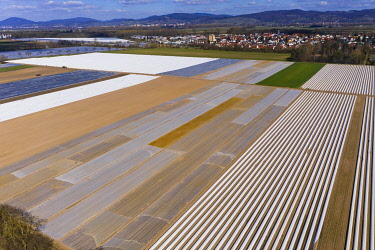 IBXMOX04870096 Asparagus cultivation, asparagus fields covered with white tarpaulin, Bergstrasse, Hesse, Germany, Europe