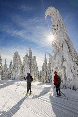 IBLDJS04863479 Cross-country skiers on cross-country trail surrounded by snow-covered spruces, Feldberg, Black Forest, Baden-Wurttemberg, Germany, Europe