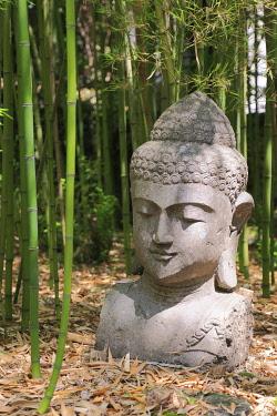 IBLPSE03933063 Buddha head, Les Bambous du Mandarin bamboo forest, Departement Var, Provence-Alpes-Cote d'Azur, France, Europe