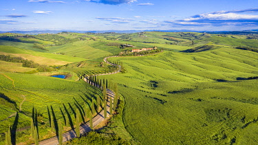 IT08146 Italy, Tuscany, Val d'Orcia, Siena Province, Cypress tree road leading to Agriturismo Baccoleno near Asciano