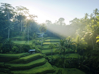 IDA0953AW Tegalalang Rice Terraces near Ubud, Bali, Indonesia