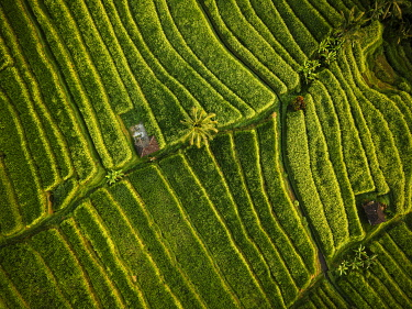 IDA0955AW Aerial View of Jatiluwih Rice Terraces, Tabanan, Bali, Indonesia