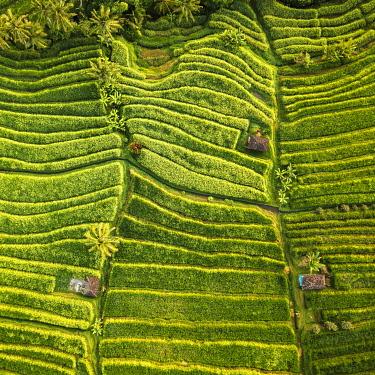 IDA0956AW Aerial View of Jatiluwih Rice Terraces, Tabanan, Bali, Indonesia