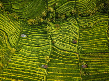 IDA0957AW Aerial View of Jatiluwih Rice Terraces, Tabanan, Bali, Indonesia