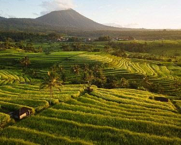 IDA0959AW Aerial View of Jatiluwih Rice Terraces, Tabanan, Bali, Indonesia