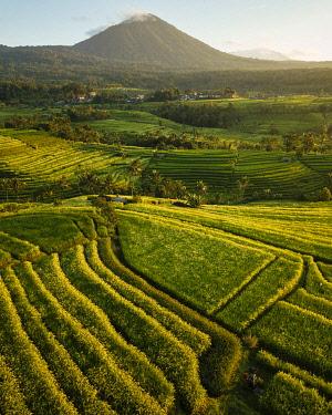 IDA0960AW Aerial View of Jatiluwih Rice Terraces, Tabanan, Bali, Indonesia