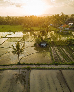 IDA0967AW Aerial View of Sunset over Rice Fields near Sidemen, Bali, Indonesia