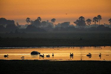 BOT5423AW Botswana, Okavango Delta, Abu Camp, sunrise