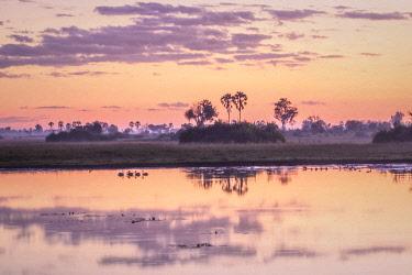 BOT5432AW Botswana, Okavango Delta, Abu Camp, dawn