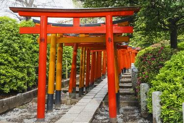 TPX69944 Japan, Honshu, Tokyo, Bunkyo-ku, Nezu Shrine, Torri (Gate) Tunnel