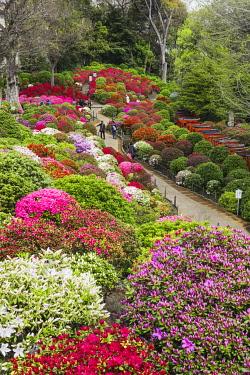TPX69962 Japan, Honshu, Tokyo, Bunkyo-ku, Nezu Shrine, The Azalea Garden