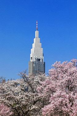TPX70064 Japan, Honshu, Tokyo, Shinjuku, Shinjuku Goen National Garden, Cherry Blossom and Yoyogi Building