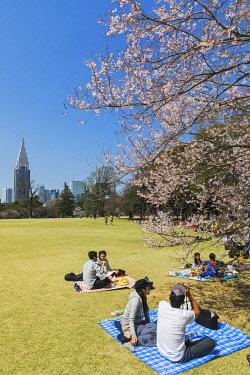 TPX70069 Japan, Honshu, Tokyo, Shinjuku, Shinjuku Goen National Garden, People Picniking Under Cherry Blossom