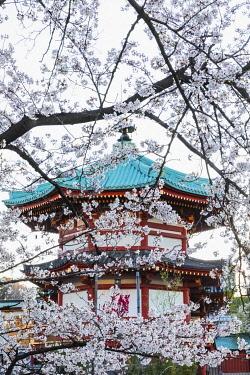 TPX70093 Japan, Honshu, Tokyo, Ueno, Ueno Park, Shinobazu Pond, Bentendo Temple
